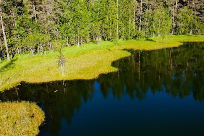 Панорама озера в лесу